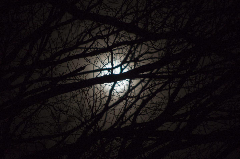 day23-jan16-moon